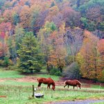 Horses grazing in the fall beauty of Sugarbush Farms