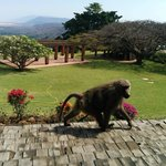 Foto de Lake Manyara Wildlife Lodge