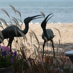 Foto van Wavecrest Bed and Breakfast  on Pelee Island