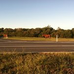 Assateague State Park Campingの写真