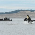 B. C. Whale Watching Tours