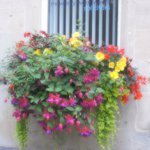 window boxes all over Bath
