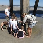 Sifting through the sand for critters