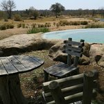 Photo of Motswari Private Game Reserve