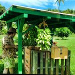 A nearby honor-system fruit stand
