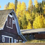 Barn with beautiful Aspens
