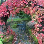 Fall colors come to the garden