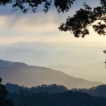 Binsar Views