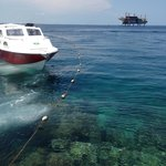 Borneo Divers Mabul Island Resort의 사진