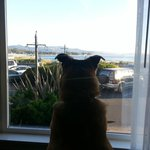 Our pooch watching the people
