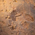 fossilized prints 4