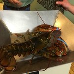 Our Lobster Before Cooking