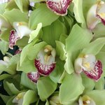 Orchids in flower arrangements