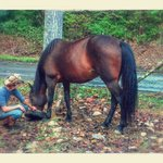 Bilde fra Twin Valley Bed and Breakfast and Horse Ranch
