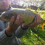 Lovely Common Carp caught 5ft from the bank