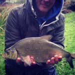 Bream on the pole