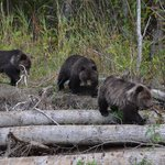 Foto de Tweedsmuir Park Lodge - Bella Coola Grizzly Bear Tours