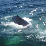 whale watch in Cape Cod