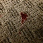Red stains on carpet (blood?)