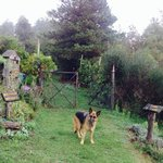 Maggie - very friendly and clever dog in Nova Arbora