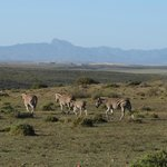 amazing chance to see African animals