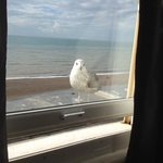 Visiting seagull