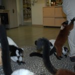 Love the lemurs!