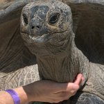 You won't believe how much this tortoise loves being touched