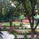 Pomelo Garden - almost magical!!