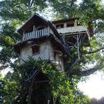 treehouse - 3 of them and dining room in one tree