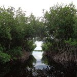Going thru the mangroves in the Everglades