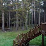 Out the back from the second floor balcony.