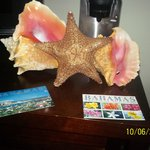 Conch shells and starfish bought in town for $5 each
