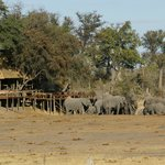 Bild från Wilderness Safaris Savuti Camp