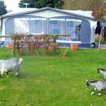 Foto de Solway Holiday Village