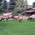 The Elk outside my front porch