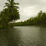Backwaters in front of the homestay
