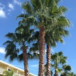 Palms outside the hotel entrance
