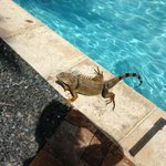 unexpected visitor at the pool