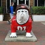 Bulldog (Dawg in Athens)