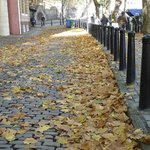 autumn leaves on walkway from hotel to river