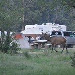 Aspenglen Campground, Rocky Mountain National Parkの�