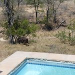 Foto di Idube Private Game Reserve Lodge