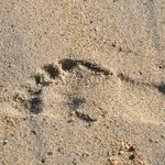 Footprint in the sand..