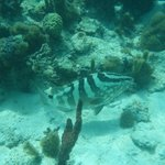 Grouper at the Bight Reef