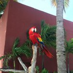 One of the many macaw's on the property