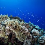 A diverse collection of hard coral on the fringe reef surrounding Rarotonga.