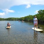 Paddle Boarding by the mangroves