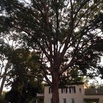 Huge beautiful tree in back yard garden