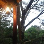 Foto de Fig Tree Camp